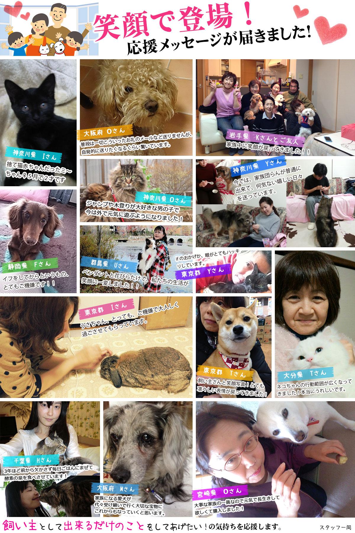 犬の病気・猫の病気体験談