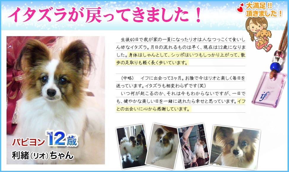 体験談1:犬の病気・猫の病気