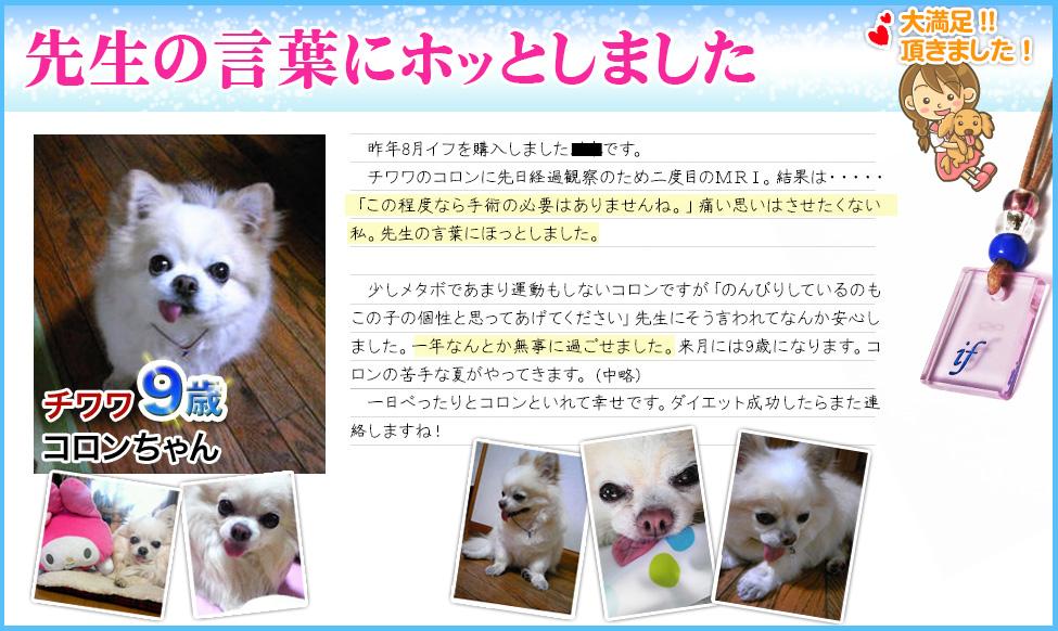 体験談3:犬の病気・猫の病気