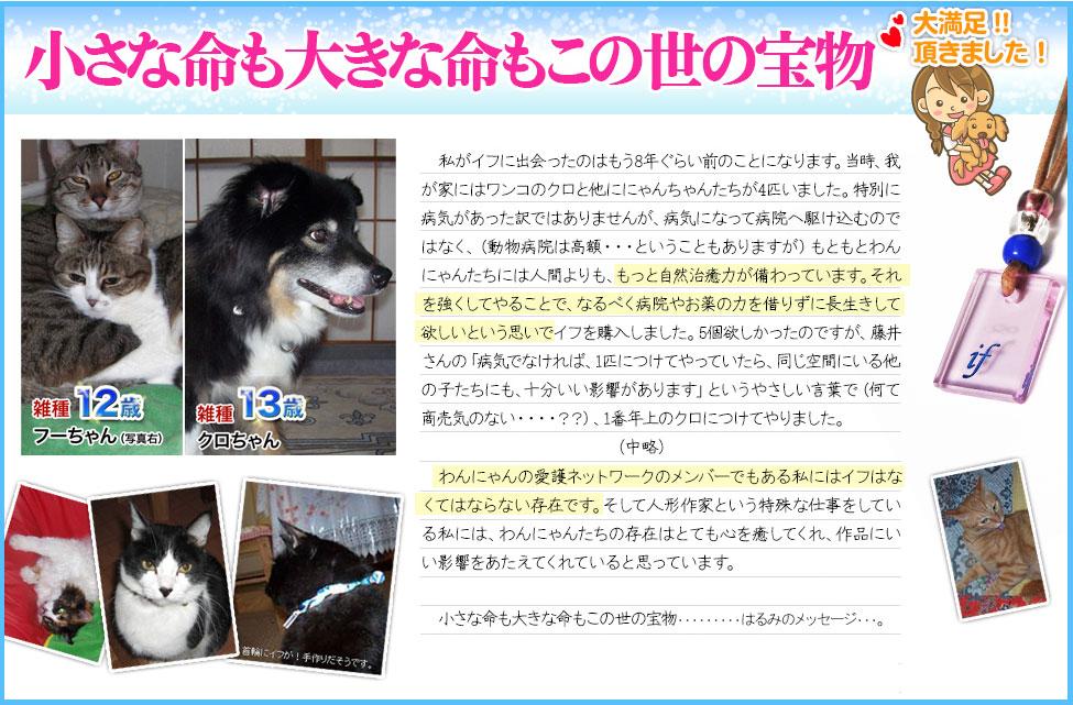 体験談4:犬の病気・猫の病気